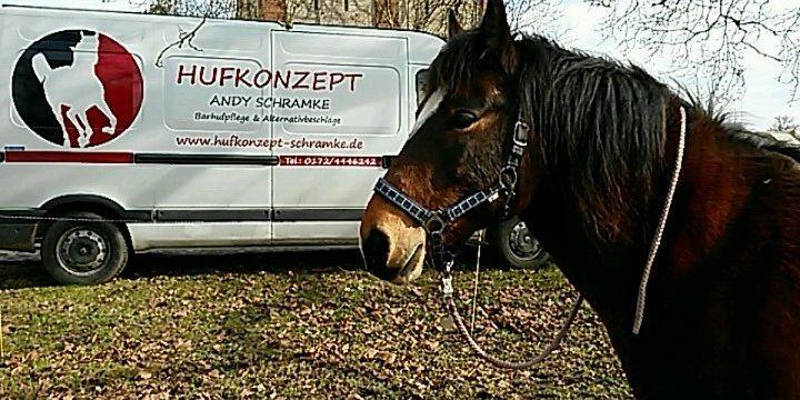 Auto und Pferd